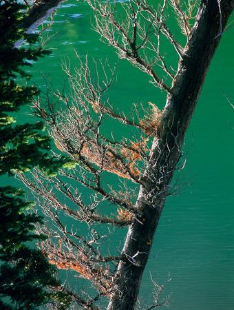 Phyllis Lake, White Cloud Mountains, Idaho Фото со стока