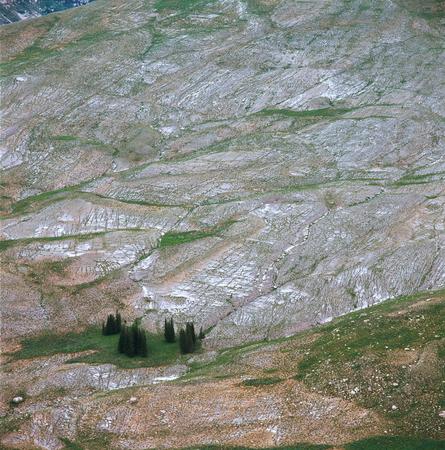 Beards Wheatfield, Caribou-Targhee National Forest, Wyoming Фото со стока