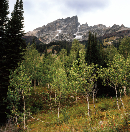 Teewinot Mountain and aspen grove from the Moose Ponds Trail, Grand Teton National Park, Wyoming