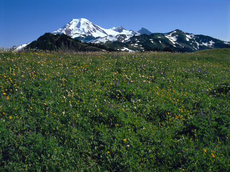 Mount Baker from the Skyline Divide Trail, Mount Baker Wilderness, Washington