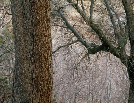 Forest along the North Shore Trail, San Bernardino Range, California Фото со стока