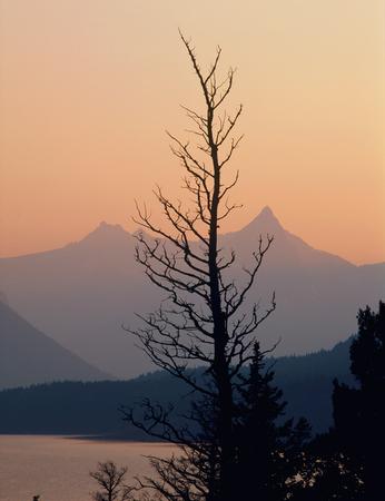 Tree silhouette and St. Mary Lake at twilight, Glacier National Park, Montana Фото со стока