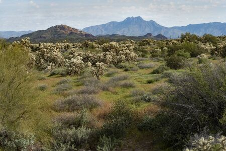 Four Peaks Mountain from Lost Dutchman State Park, Arizona