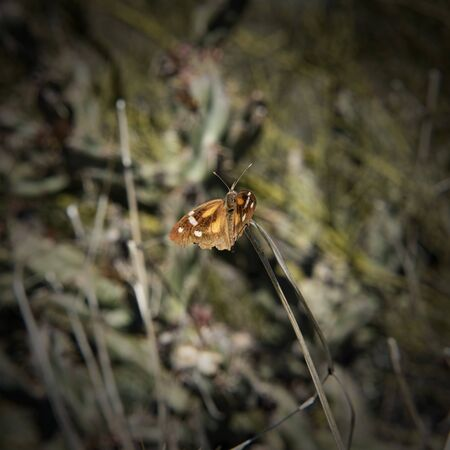 Moth along the Boulder Canyon Trail, Superstition Mountains, Arizona
