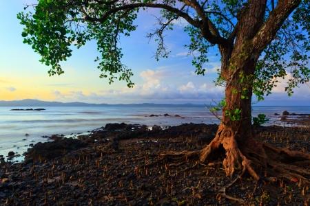harmonic colors of nature at Borneo, Sabah, Malaysia Stock Photo - 17684756