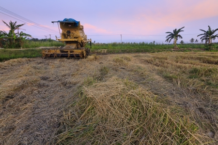 Combine harvester and harvested paddy at Borneo, Sabah, Malaysia photo