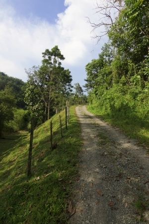 Gravel path leading up a hill at Borneo, Sabah, Malaysia photo