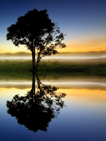mighty: Reflection and silhouette of a single tree Stock Photo
