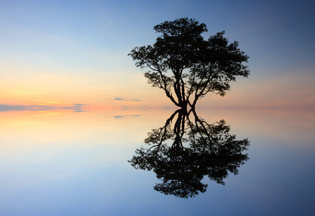 Silhouette and reflection of single tree at sunset