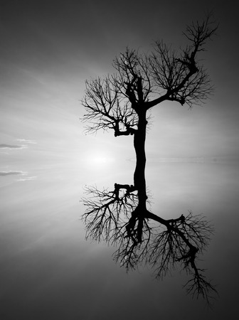 Reflection and silhouette of a dead tree in black and white photo