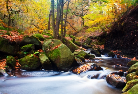 brooks: golden trees with a fast flowing stream
