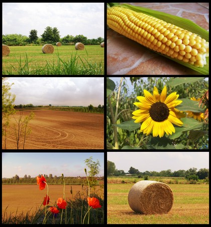 mais: collage campaign Stock Photo