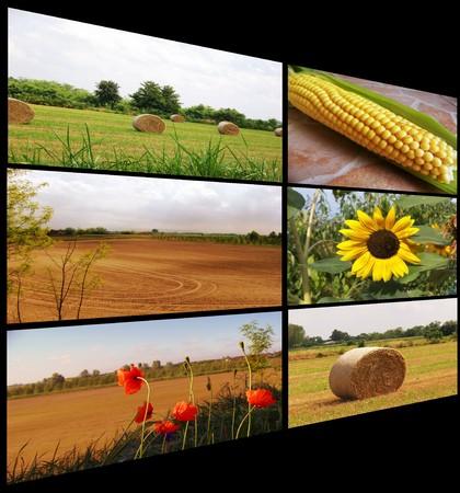 collage campaign Stock Photo