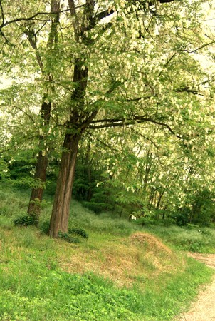 alberi nel bosco