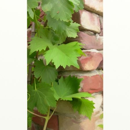 tooled: grape leaves with digital painting Stock Photo