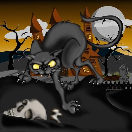 black cat and skull photo