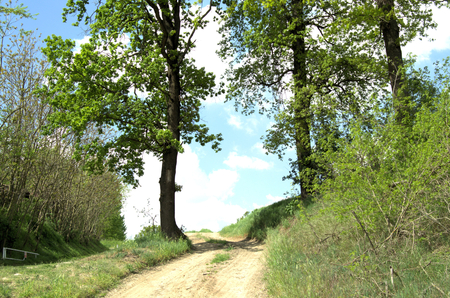 footpath: countryside and oak trees in spring