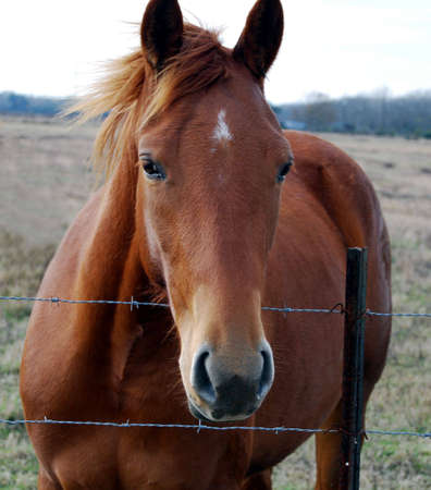 A head shot of a brown horse in a pasture. Stock Photo