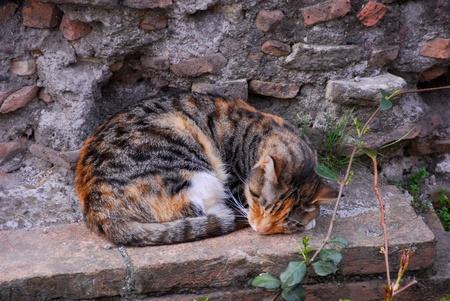 Cat Enjoys a Nap at Ancient Roman Temple Wall Stock Photo - 12467936