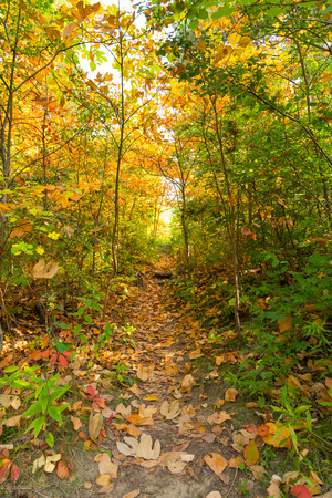 Rural Trail in the Fall showing lots of colorful leaves photo
