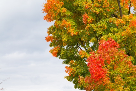 changed: A tree showing colourful leaves in the fall with copy space Stock Photo