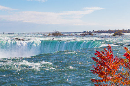 horseshoe falls: A view of the Horseshoe Falls  with foliage on the side Stock Photo