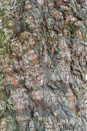 bark background: Bark Background Stock Photo