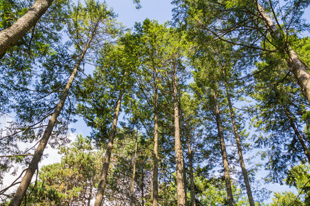 low  angle: A low angle view of trees in a forest