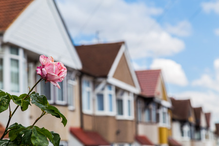 crowded space: The outside of typical terrace houses in London with the focus on the flowers.