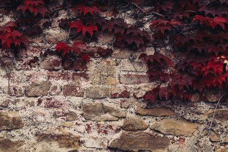 hojas antiguas: A closeup to a wall with old leaves in the fall. There is space for text