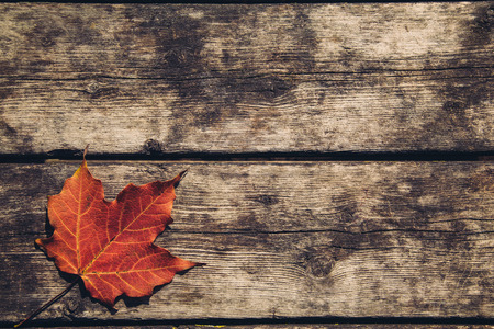 red maple leaf: Red Maple Leaf on a Wood Surface Background with space for text Stock Photo