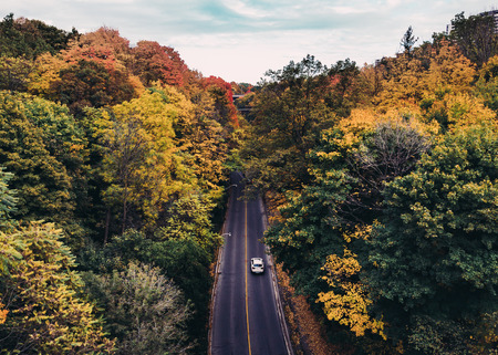 fall: Beautiful Road in Canada during the Fall. Lots of Multi colored trees and a car can be seen.