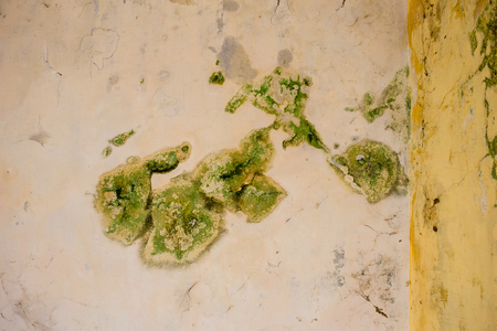 mouldy: Closeup to bright green mould on a ceiling in a building