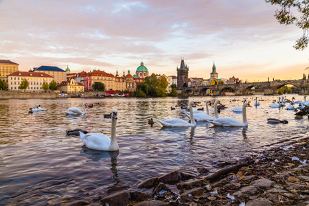 A view of Charles Bridge and the Old Town from the Malá Strana side of the river. Large amounts of swans can be seen. Stock Photo