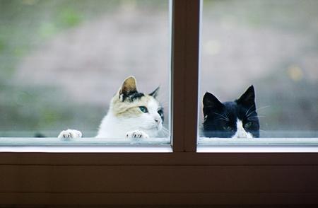 猫とフロントドアの飼料を探しています