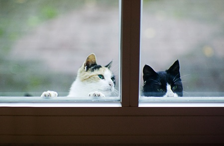cats and front door looking for fodder Stock Photo