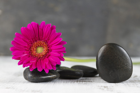hot stones: beauty therapy concept with hot stones and pink gerbera