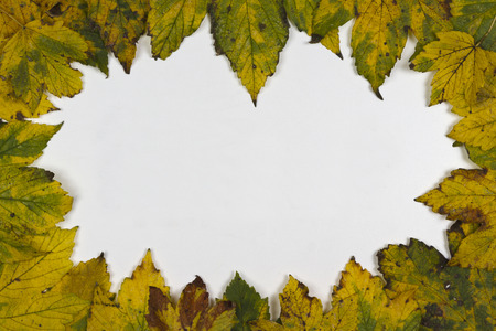 discolored: autumn leaves on a white background Stock Photo