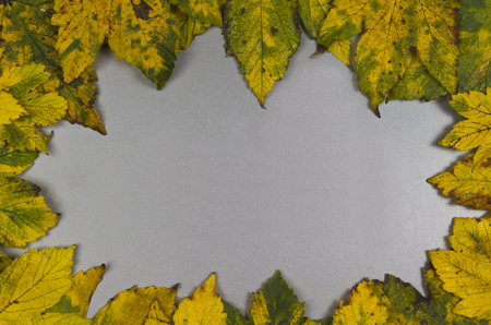 discolored: autumn leaves on a grey background