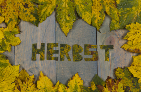 discolored: autumn leaves on a wooden background