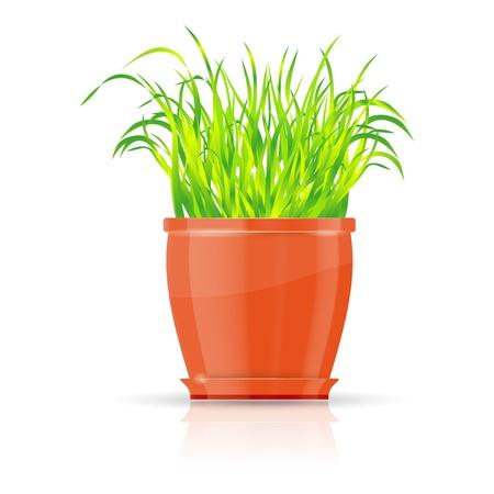 Orange flowerpot with green grass Stock Vector - 12488003