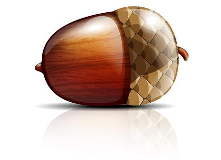 Vector illustration of glossy acorn on white background Illustration