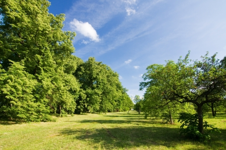 basswood: Spring countryside - meadow, trees and blue sky