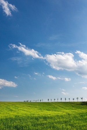 grassfield: Amazing spring countryside - green meadow, trees and blue sky