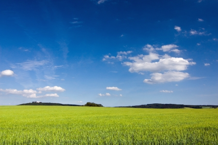 grassfield: Amazing spring summer countryside - green meadow, blue sky Stock Photo
