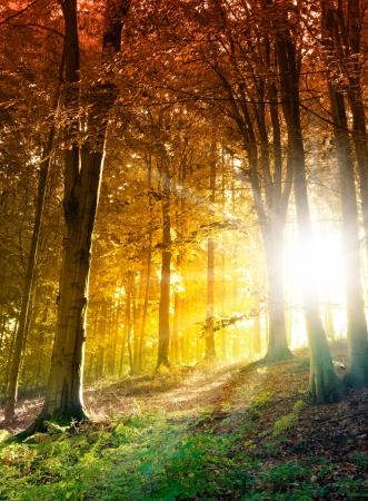秋の森の太陽