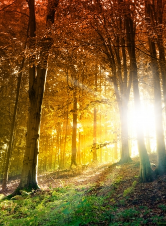 Sun in the autumn forest