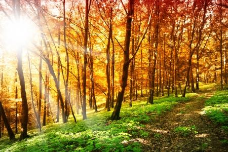 Słońce w lesie jesienią