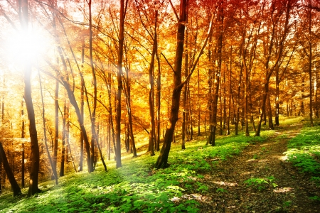 Sun in the autumn forest photo