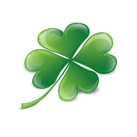 lucky day: Clover leaf with drops of water on a white background